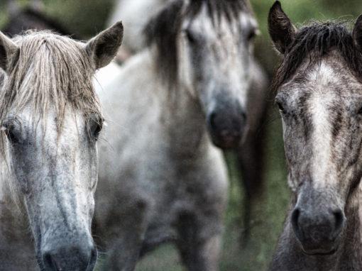 1 true self 3 horses
