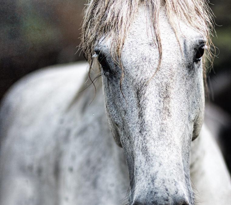 4 true self main image one horse